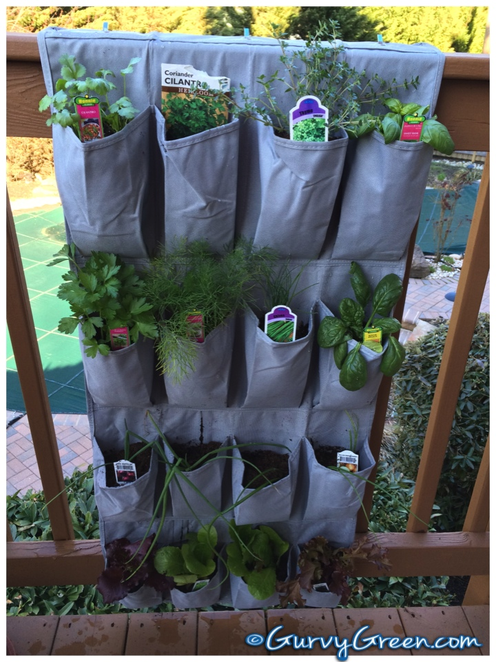 herb garden in a shoe rack